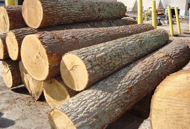 Một số loại gỗ dùng cho nhà thờ họ bằng gỗ vô cùng đắt đỏ