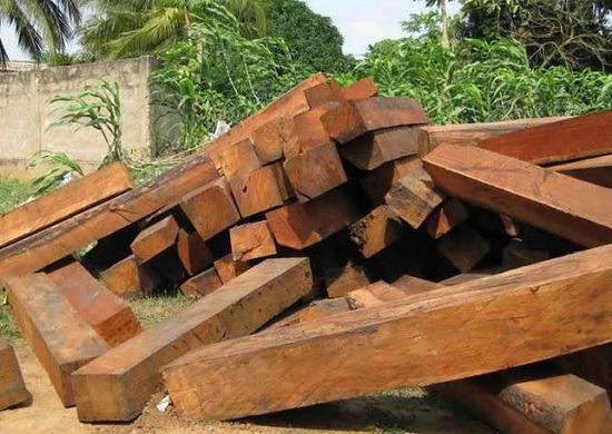 Để có một căn nhà thờ họ gỗ đẹp bạn không nên bỏ những loại gỗ này