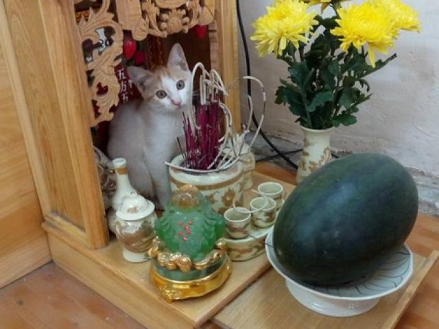 Thực hư cách thờ nhau mèo phát tài lộc mang lại may mắn